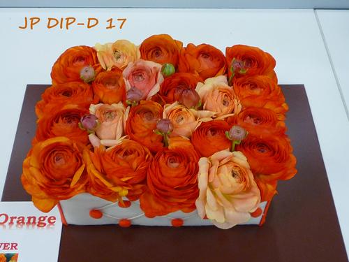 JP-DIP-D-17-(1).jpg